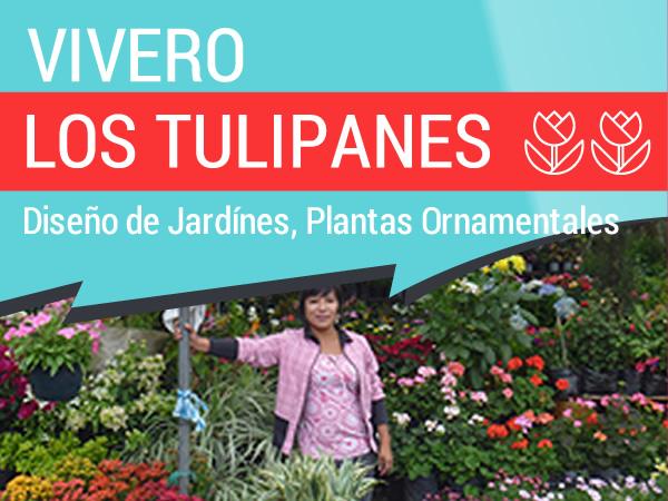 Vivero Tulipanes