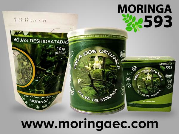 Moringa593